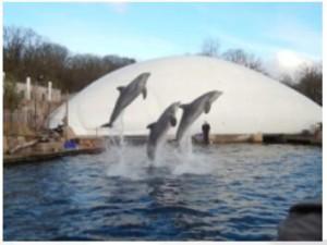 Delphinshow im Delphinarium Quelle: Journal Society GmbH / wdsf